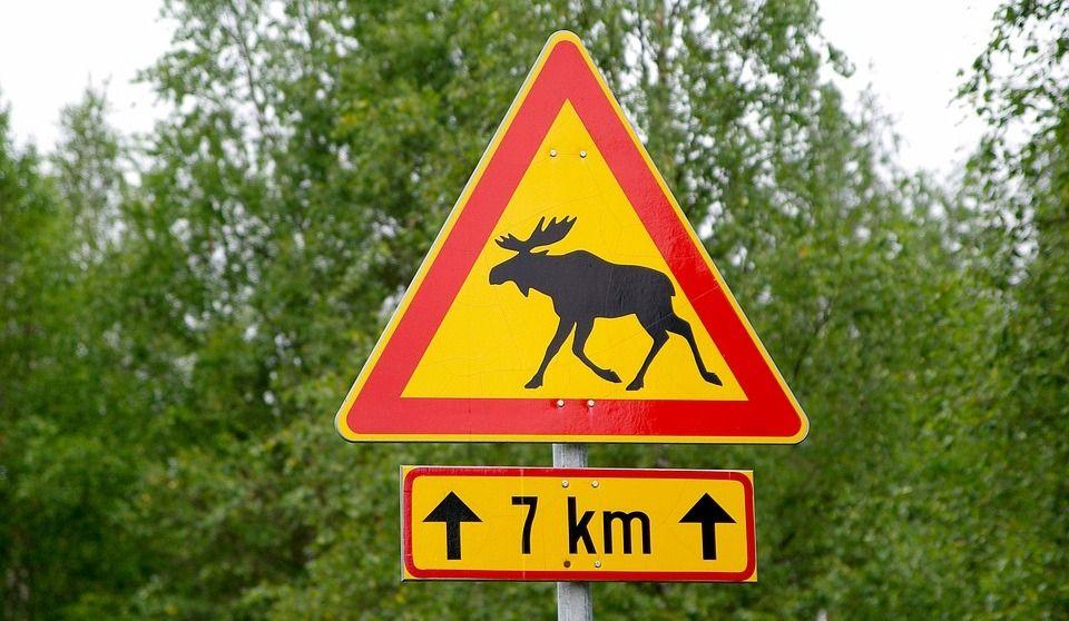 Attention: traversée d'animaux!