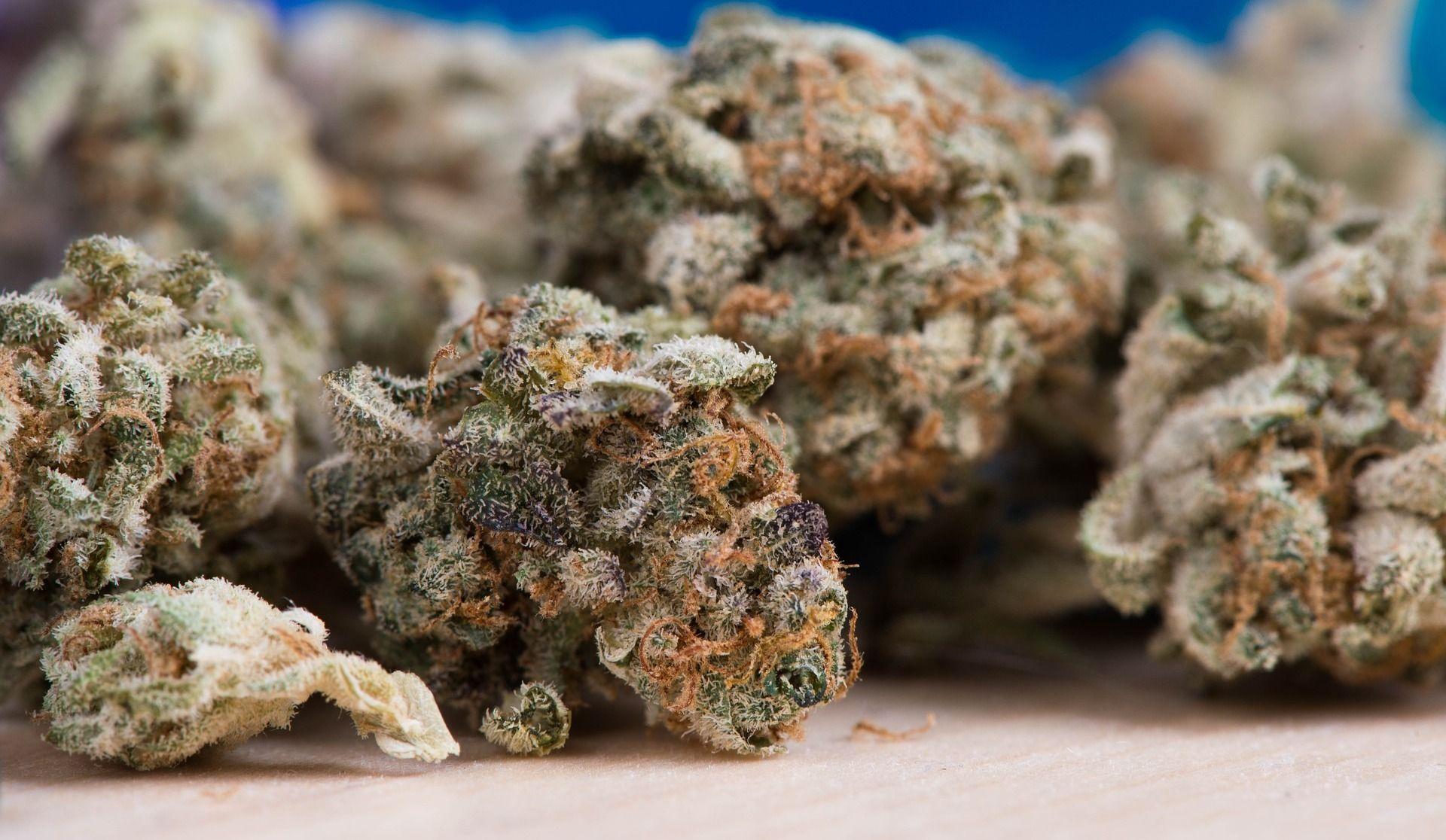 Les Californiens vont-ils se ruer sur l'or… vert — Cannabis