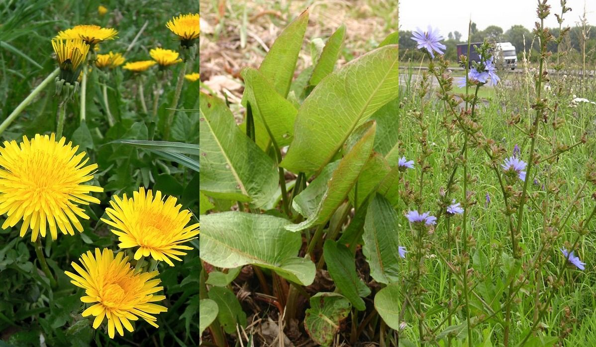 Homemade Weed Killers for your Garden